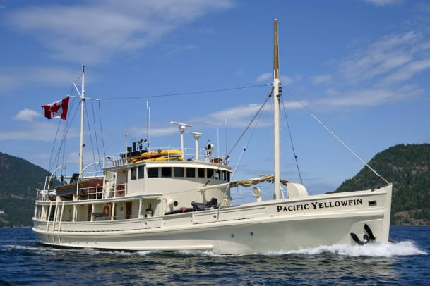 Pacific-Yellowfin_web