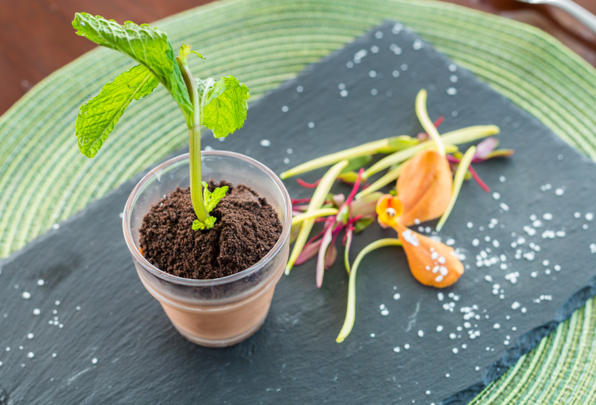 Chef Daniela Sanchez - Potted Plant Dessert