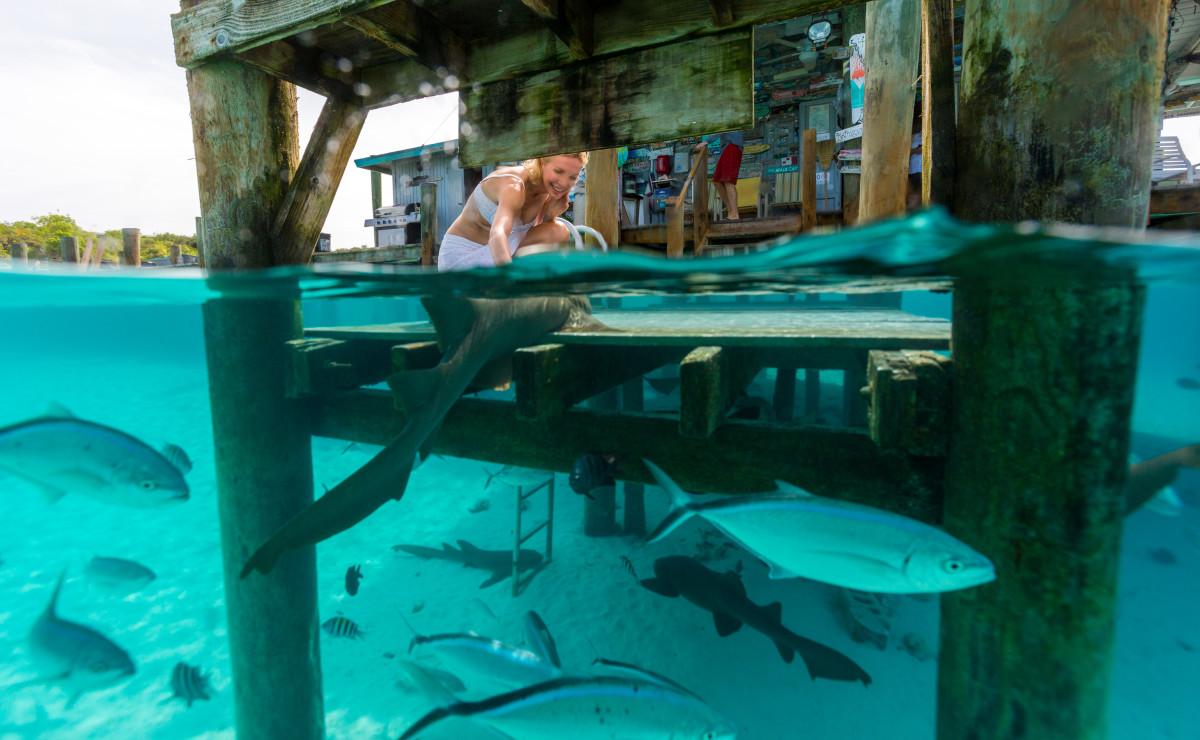 Exumas Remember When Sharks Compass Cay