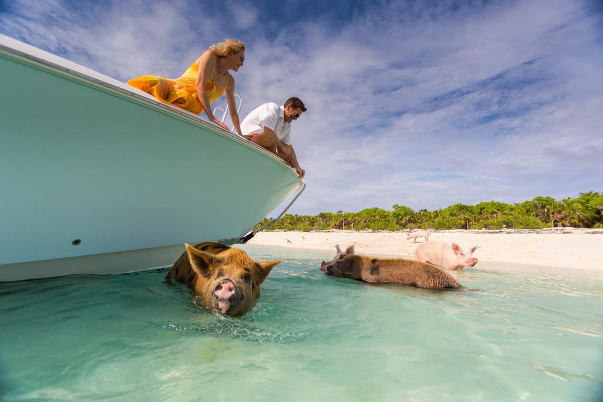 Exumas Remember When Big Major Pigs