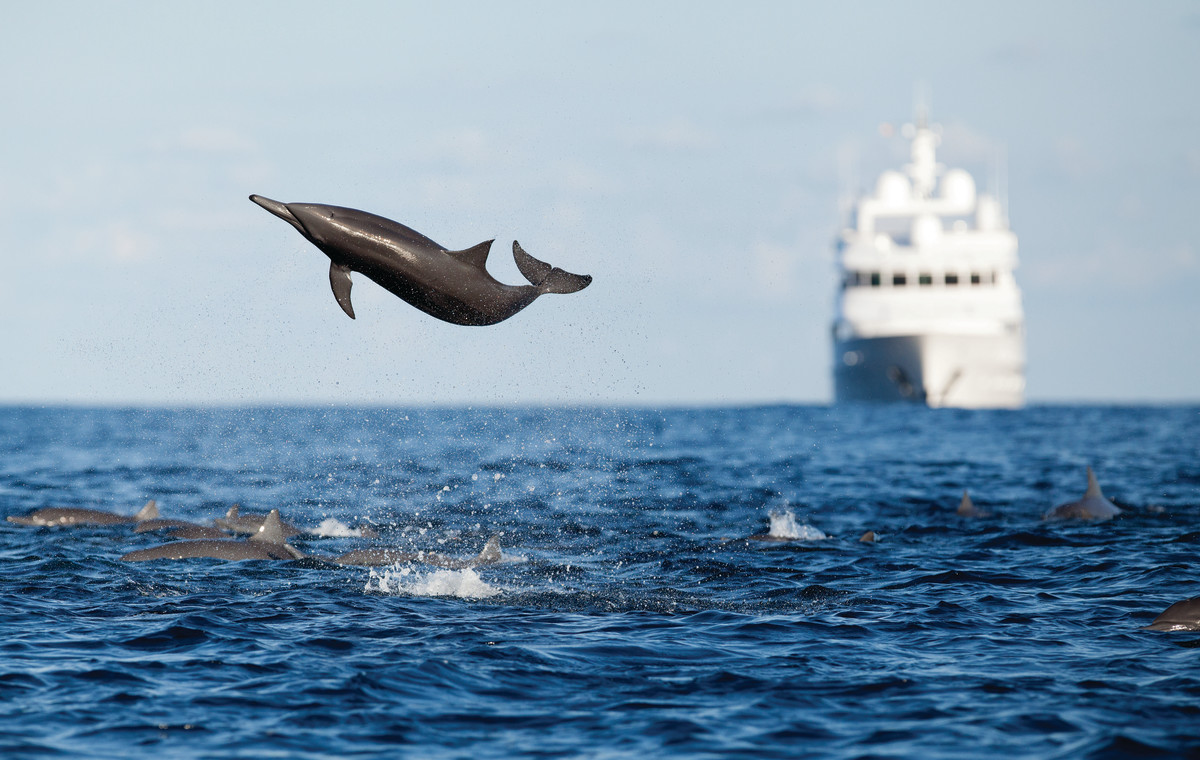 A pod of charismatic spinner dolphins puts on a show for some lucky spectators.