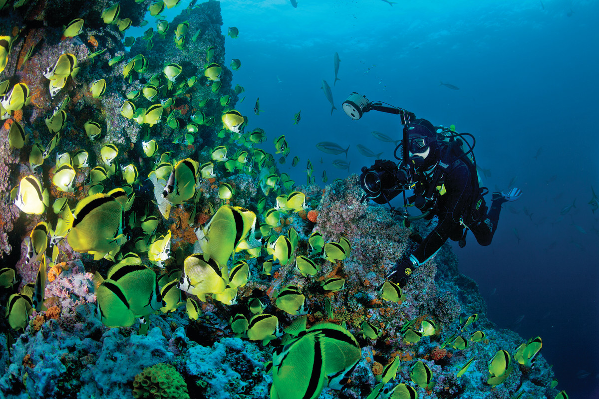Diving off Costa Rica is nothing short of spectacular. The underwater volcanic rock formations and corals are a magnet for sea life.
