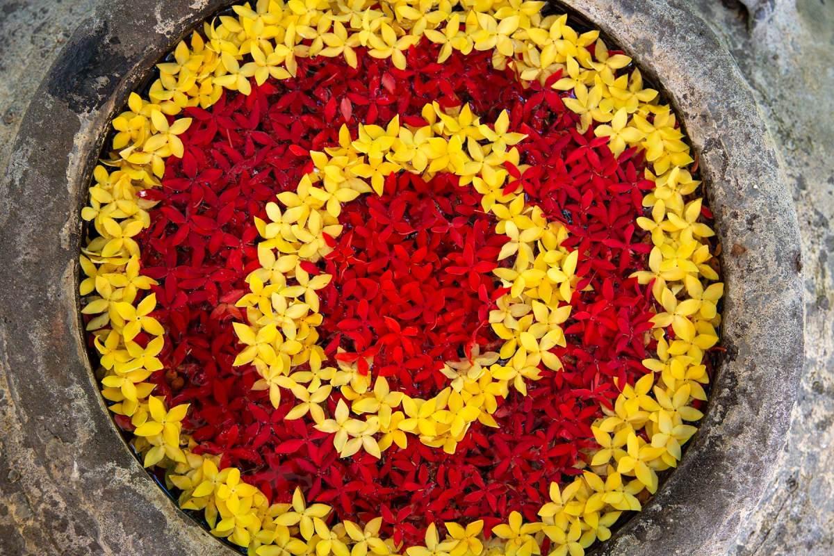 Ixora blossoms create a beautiful centerpiece