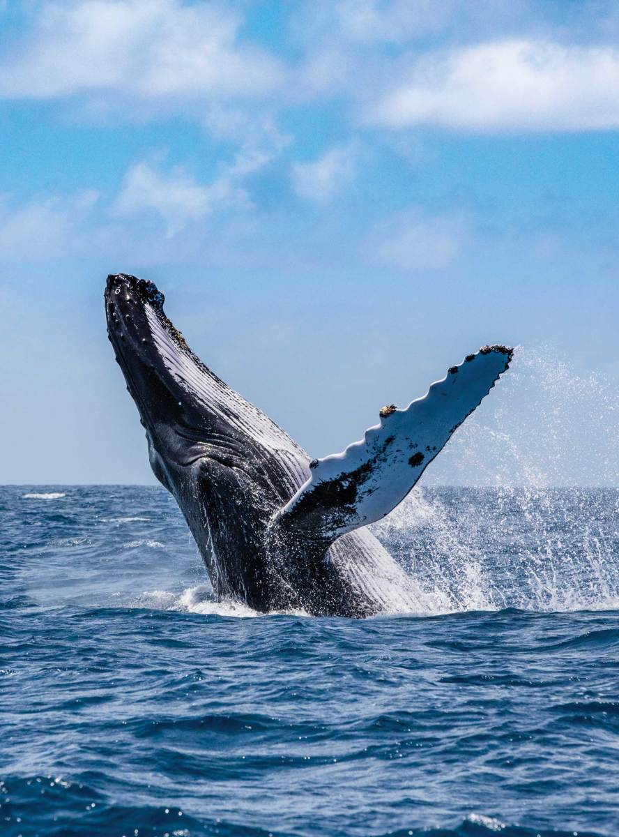 His travels aboard Dream help fuel his passion for nature photography, exposing him and his family to firsthand opportunities to view wildlife, such as this humpback whale, snapped in the Silver Banks of the Dominican Republic.