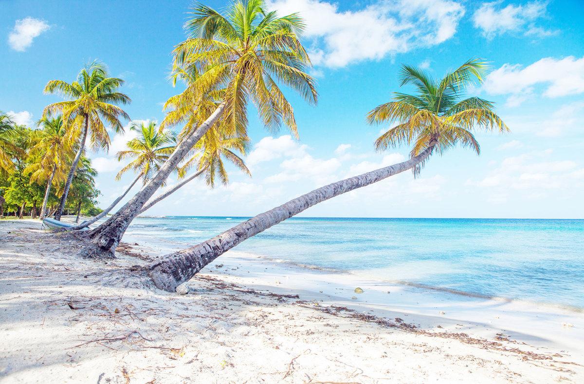 Palms reach seaward on an  idyllic beach on Mustique.